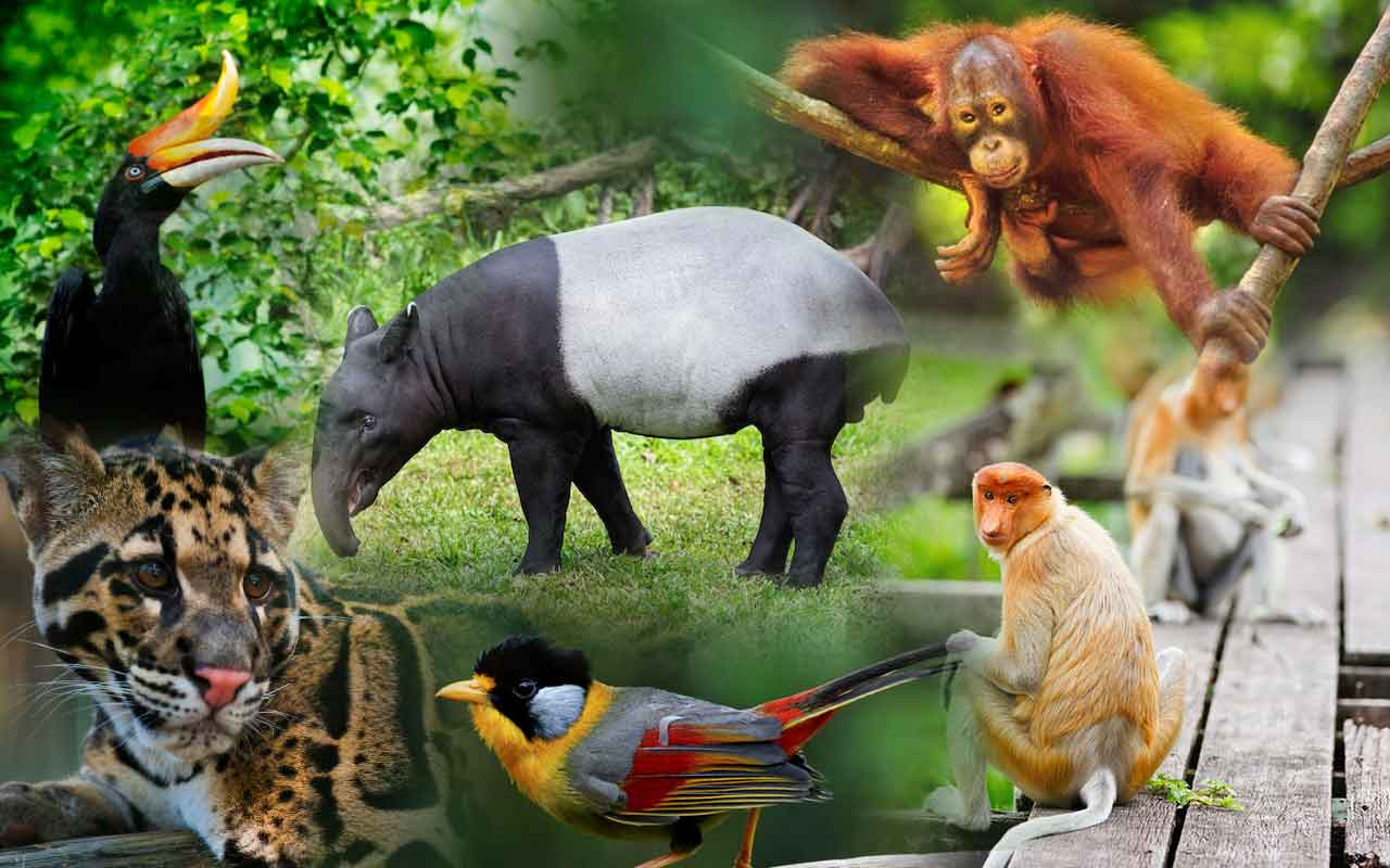 wonderful wildlife of Malaysia