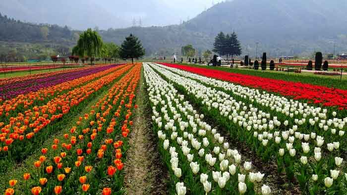 Indira Gandhi Memorial Tulip Garden