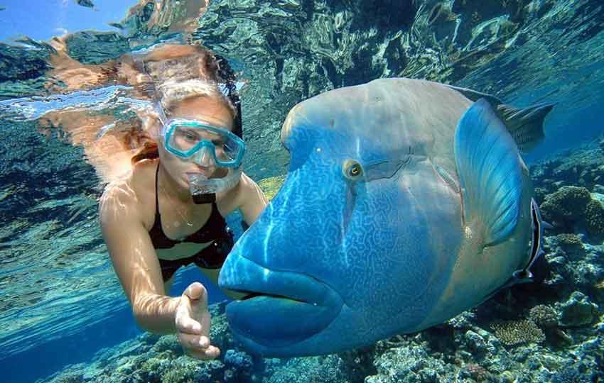 scuba diving coral Reefs Maldives