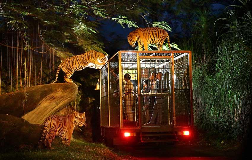 night safari singapore
