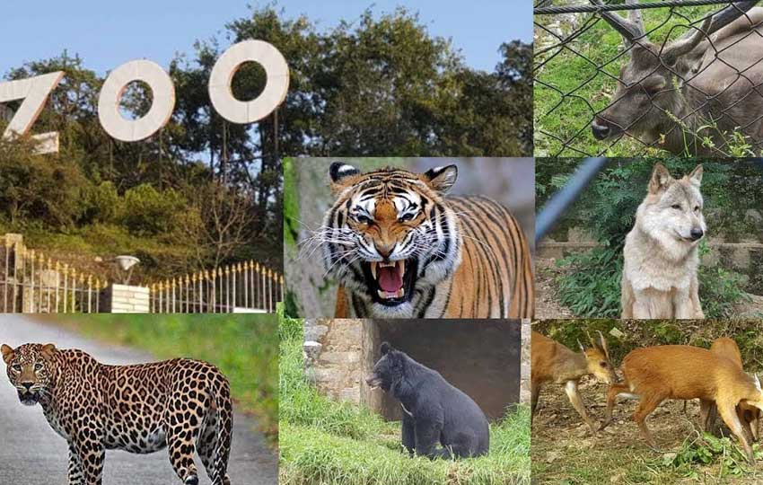 Nainital Zoo Pt. Govind Ballabh Pant Zoo
