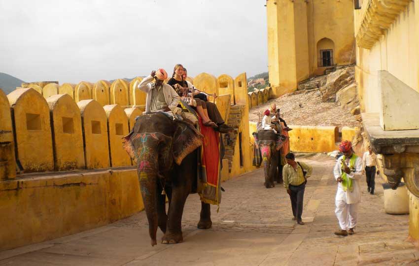 elephants at Amer