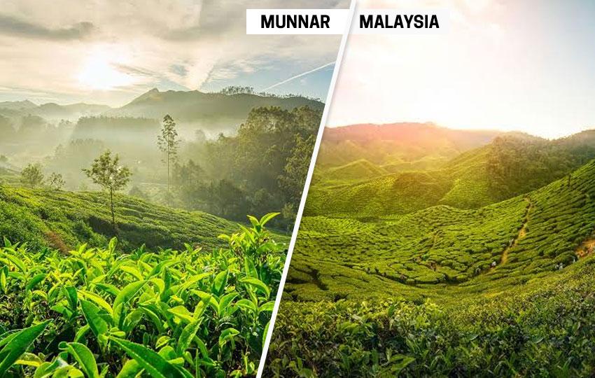 Munnar (Cameron Highlands, Malaysia)