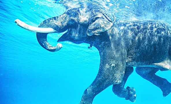 6-days-andaman tour packages