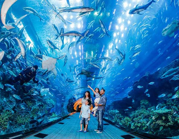 Dubai Aquarium – The Underwater Zoo